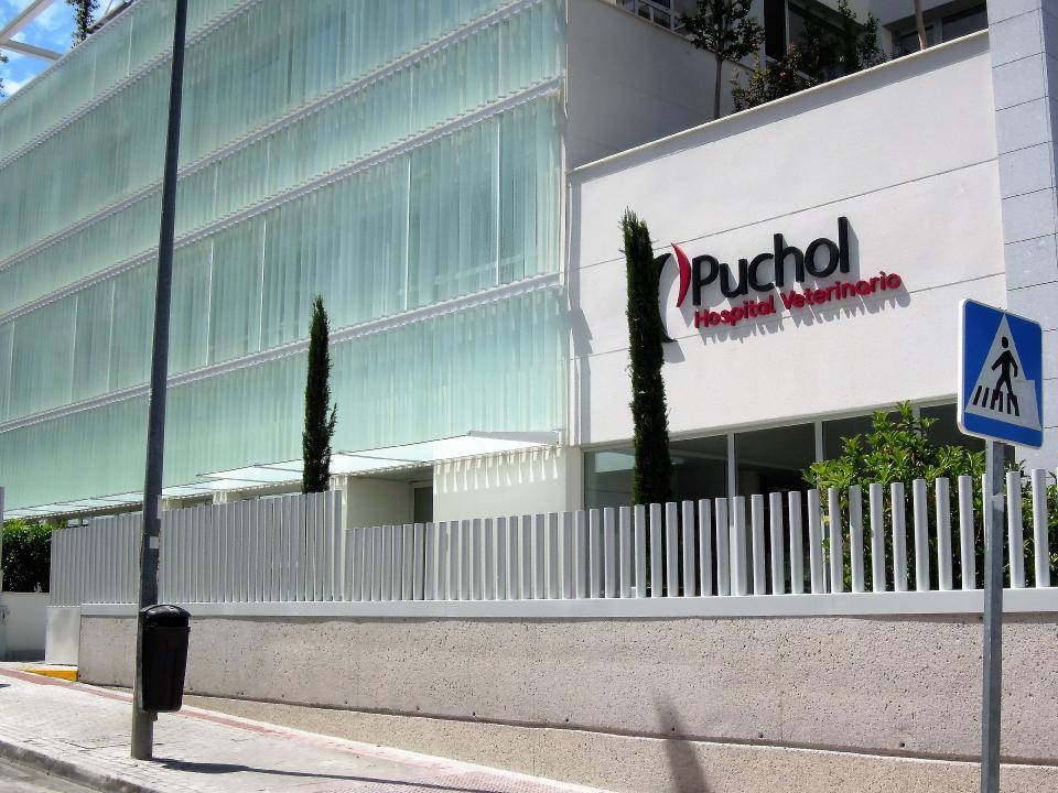 puchol36